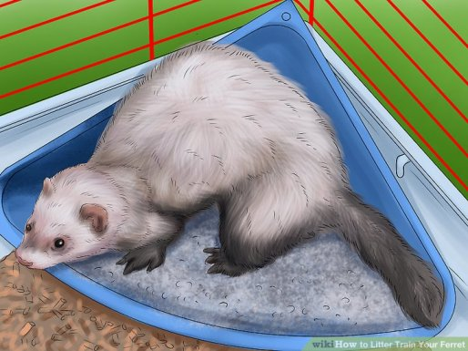 aid26344-v4-728px-Litter-Train-Your-Ferret-Step-3-Version-3